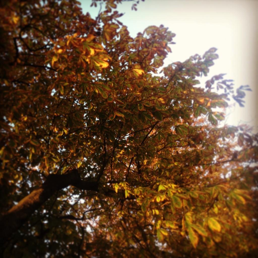 efterarsblade_farver