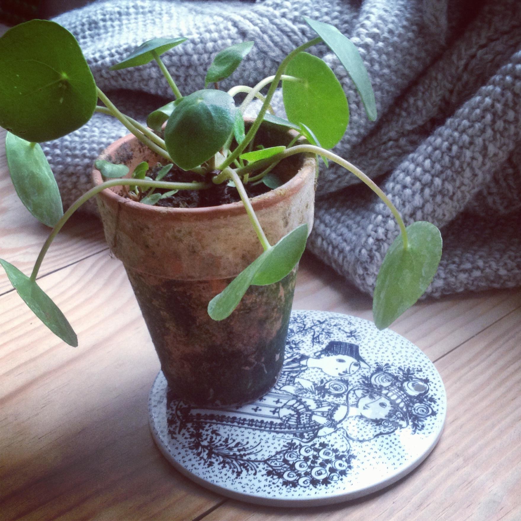 trend_potteplanter