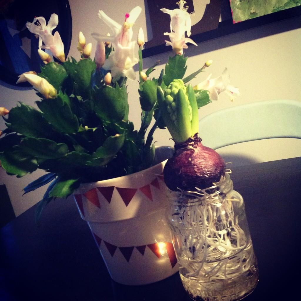 opbevaringsglas_genbrug_reuse_hyacint_recykel